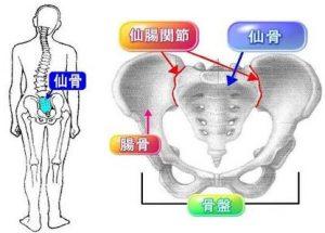 仙腸関節 画像